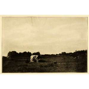 Cattle Livestock Agriculture Historic Image   Original Halftone Print