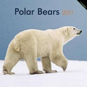 2011 Animal Calendars Polar Bears   12 Month   30x30cm